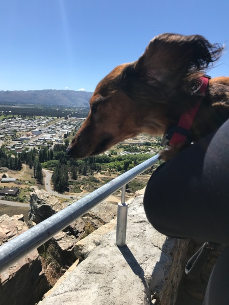Redd taking in the view